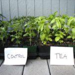 1612 Для чого потрібен компостний чай?