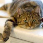 2277 Почему кот перестал нормально есть?