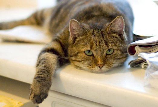Почему кот перестал нормально есть?