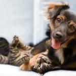 2673 Симптоми авитоминоза у кішок і собак
