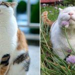 4186 10 обязанностей любого кота