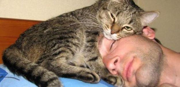 4262 Топ-10 фотографий с домашними животными, которых хочется обнимать и тискать
