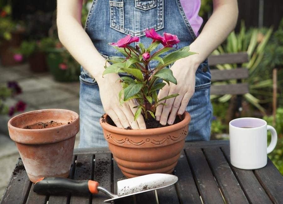 5397 Можно ли сейчас пересаживать комнатные цветы: лунный календарь пересадки растений
