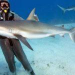 5704 Рифовая акула опасна ли для человека, акулы страшные
