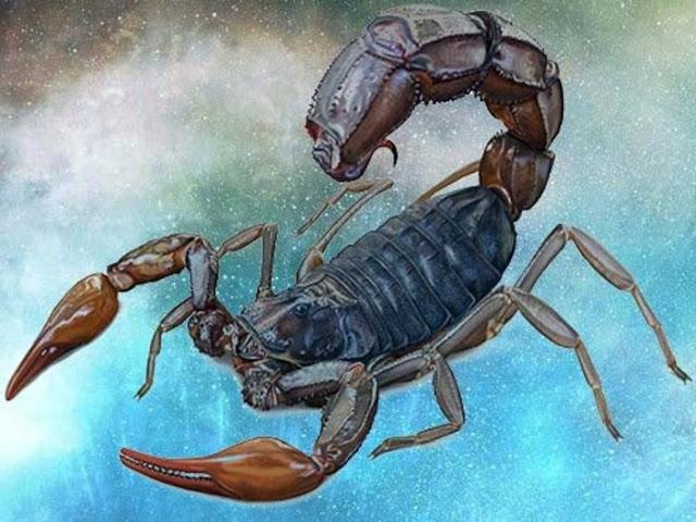 6018 Если вы Скорпион, то вам нужен особый тип партнера