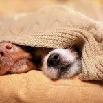 6165 Пришли, увидели, победили – почему собаки так любят спать на кровати