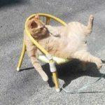 6271 13 смешных мини-историй в картинках про котиков