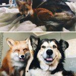 6338 30 трогательных фото «До и После» животных, которые выросли вместе